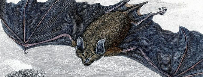 bat information