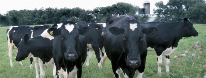 ky dairy news