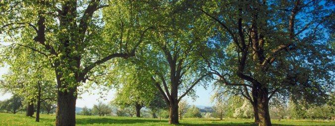 KY tree park