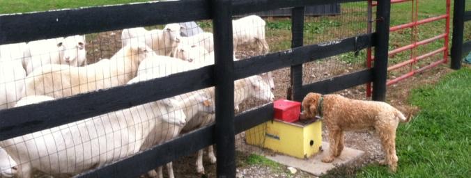livestock waterer conserves water