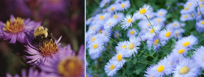 fall ky native flowers