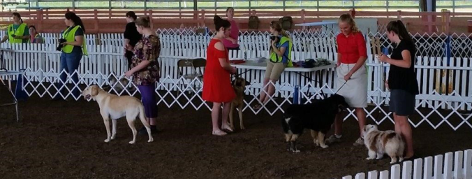 oc 4-h dog competition