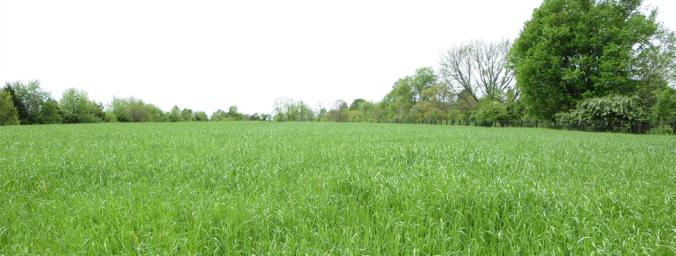 pasture grass information