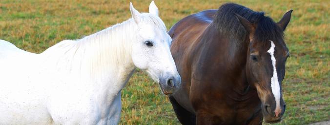 kentucky horse pasture