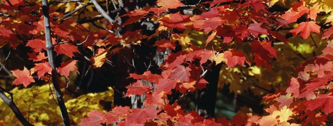 autumn leaves kentucky