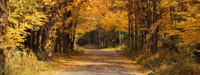 kentucky fall leaves