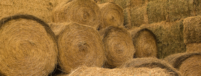 hay bales for horses