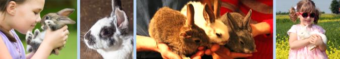 oldham county rabbit club