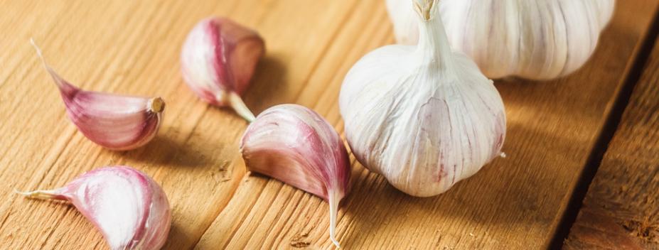grow garlic in the fall