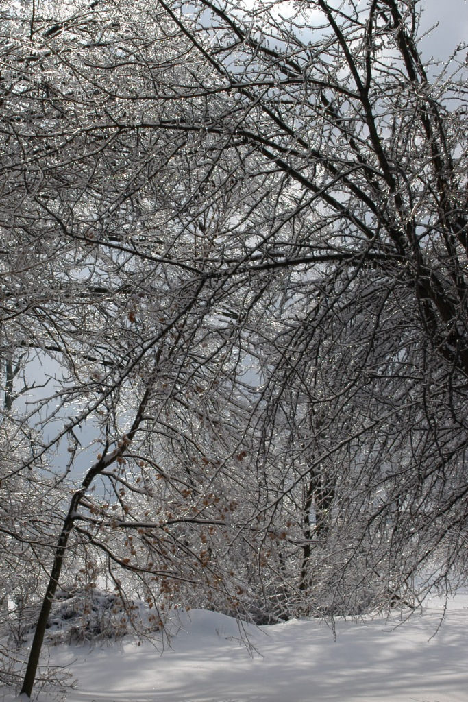 icy winter landscape